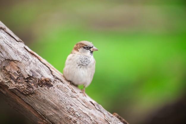 Foderbræt lokker fuglene til